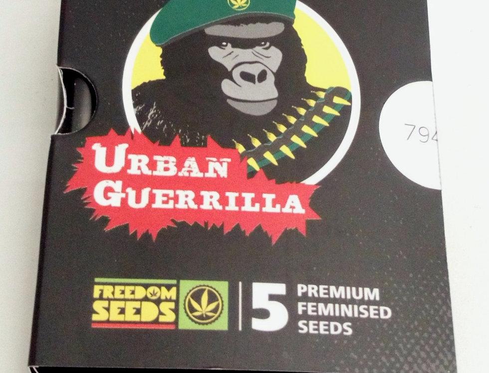 Urban Guerrilla feminised seeds/5 pack