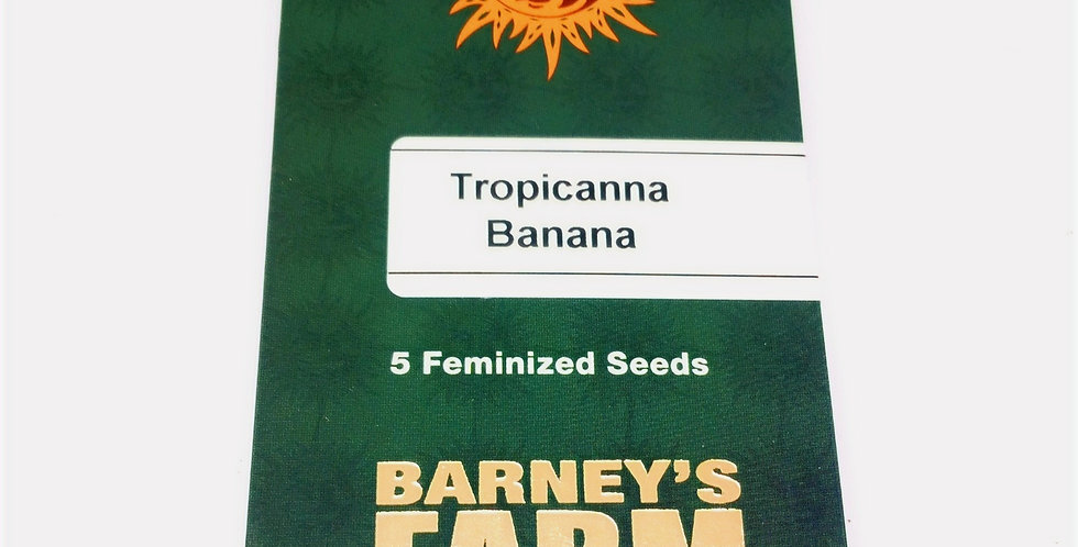 Tropicana banana 5 pack