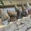 """Thumbnail: Big Gnomes approx 4"""" tall"""