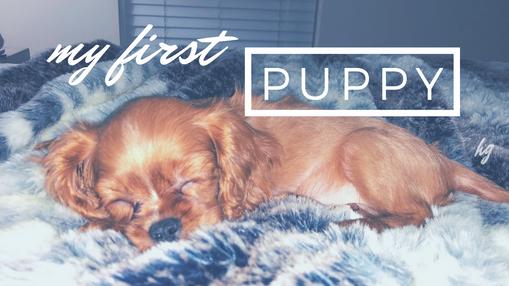 my first puppy