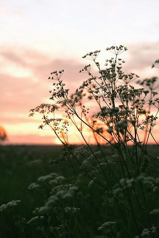 Sunlight Flower 1_edited.jpg