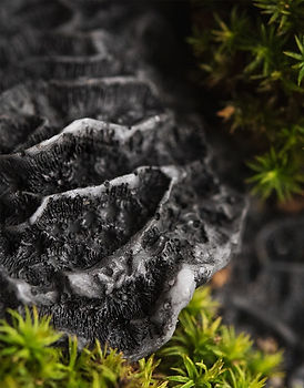 Black-coral-and-moss-frgrance-oil-new_ed