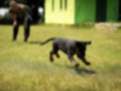 action-adorable-animal-264005.jpg