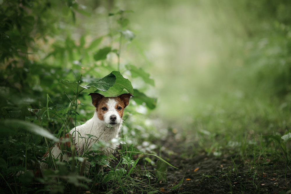 Lost dog in a bush