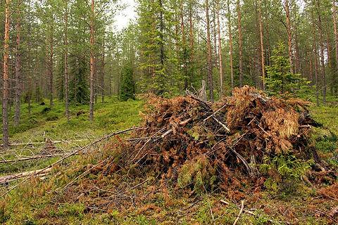forest-1273726_1280.jpg