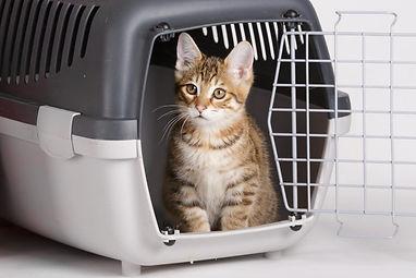 cat-crate-training2-1024x683.jpg