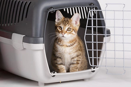 cat-crate-training2-1024x683.jpg