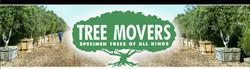Tree Movers