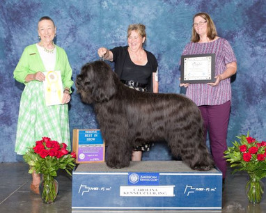 Reserve Best In Show (2)-web.jpg