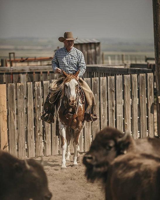 Keith watching bison.jpg