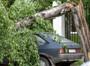 """Дерево упало на автомобиль: УК должна доказать, что проводила обследование """"своих"""" деревьев."""