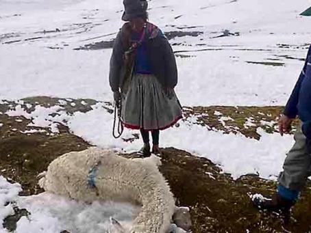 Tacna y Cusco se alistan para soportar heladas y temperaturas bajas