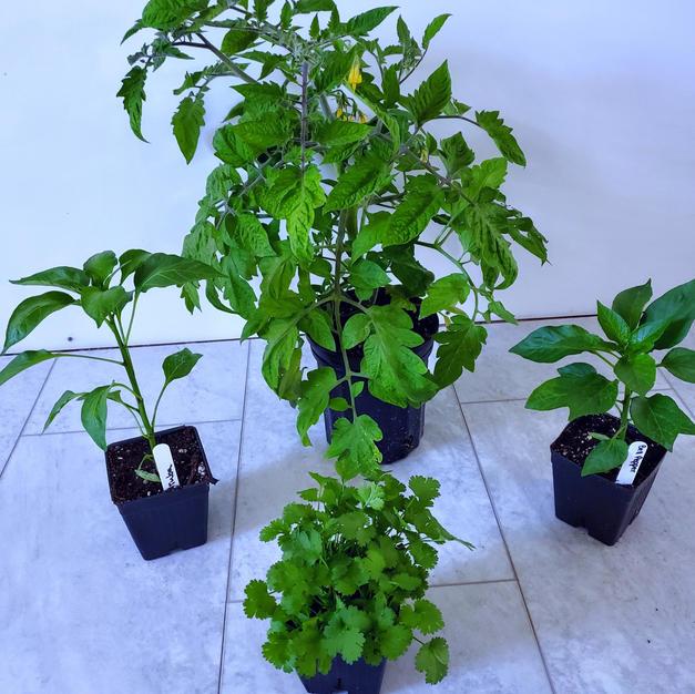 tomato, peppers, cilantro