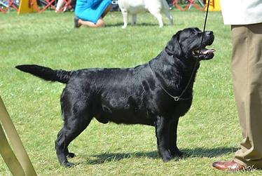 Big Papi was bred twice with Luna