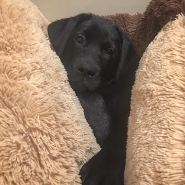 Pretty Pup.JPG