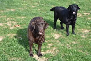 Penny&Luna.jpeg