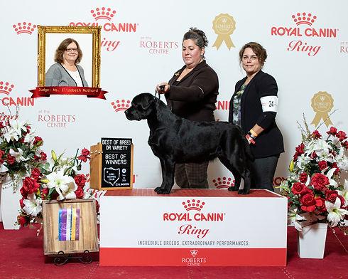 Decker Winners Dog.jpg