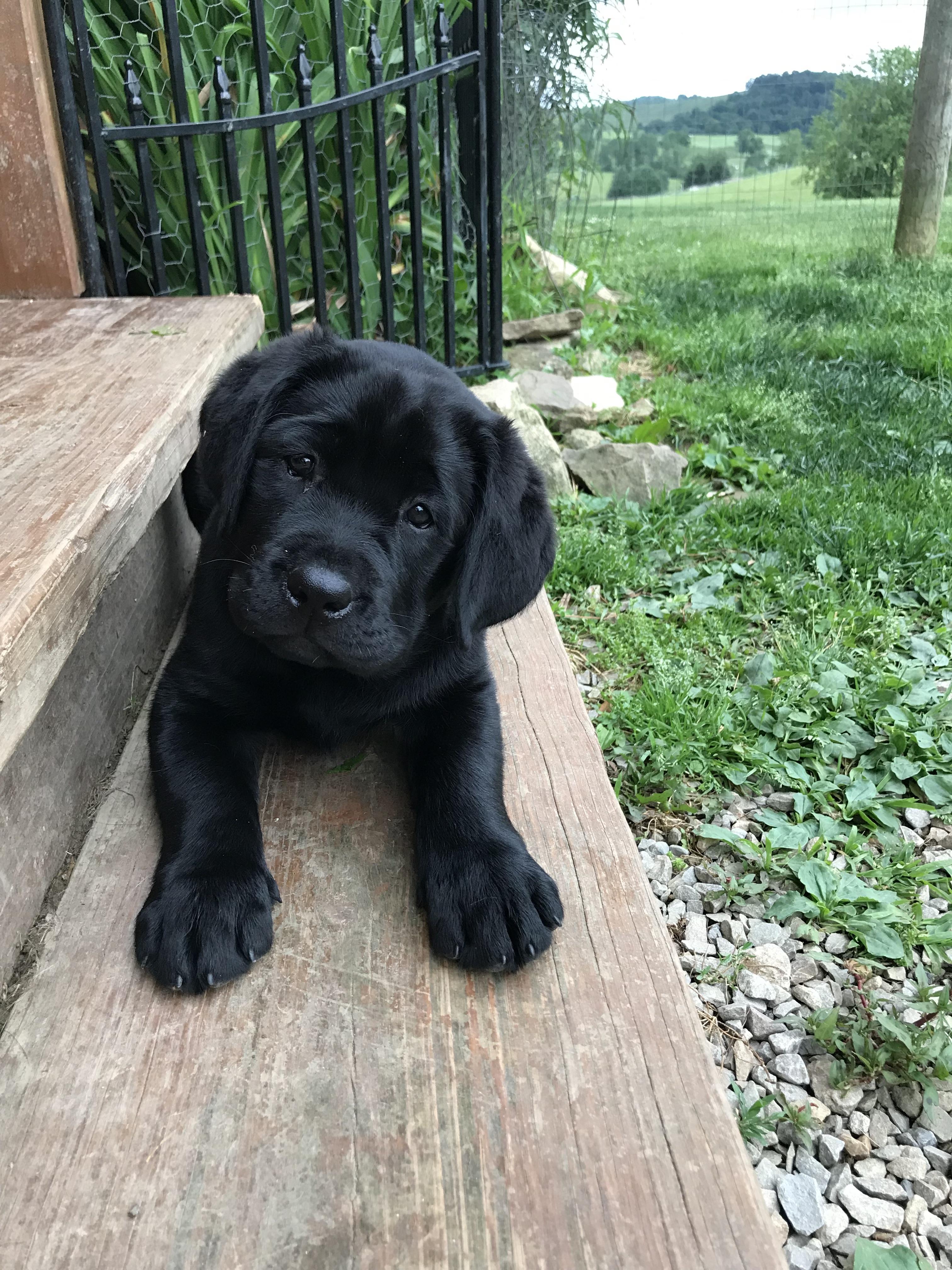 Ray Puppy