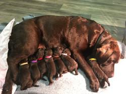 Penny 1st litter birth