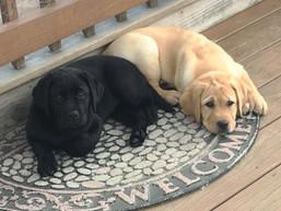 Shelby&Sunny