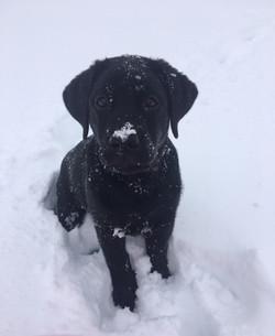 Snowy Adorable