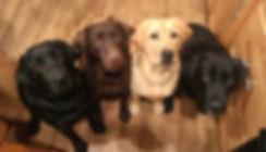 Bella Notte Labrador Foursome.jpg
