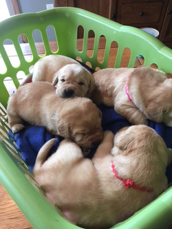 Basket o' Yellows