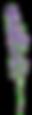 other lavendar_edited.png