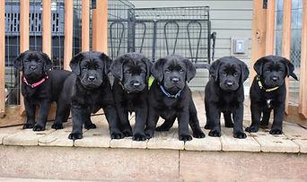 Dominic Litter Pups.jpg