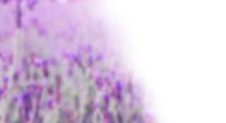 lavendar extended.jpg