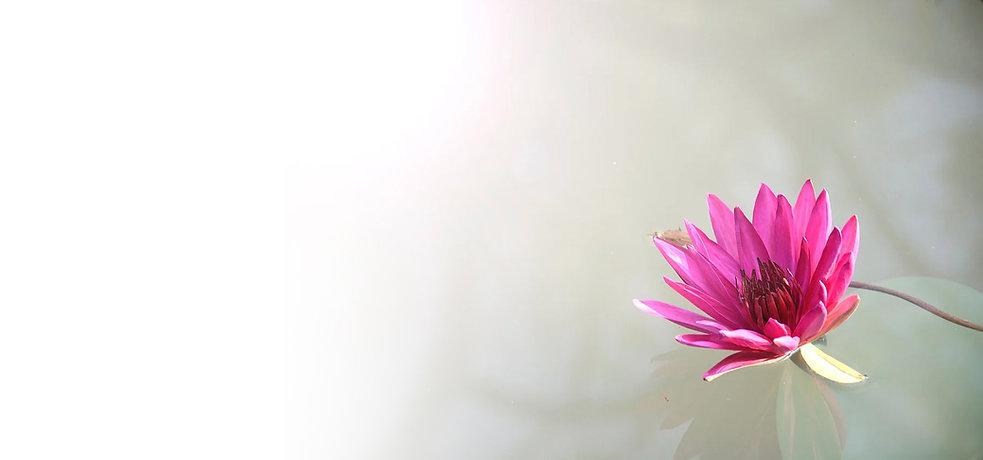 extended lotus.jpg