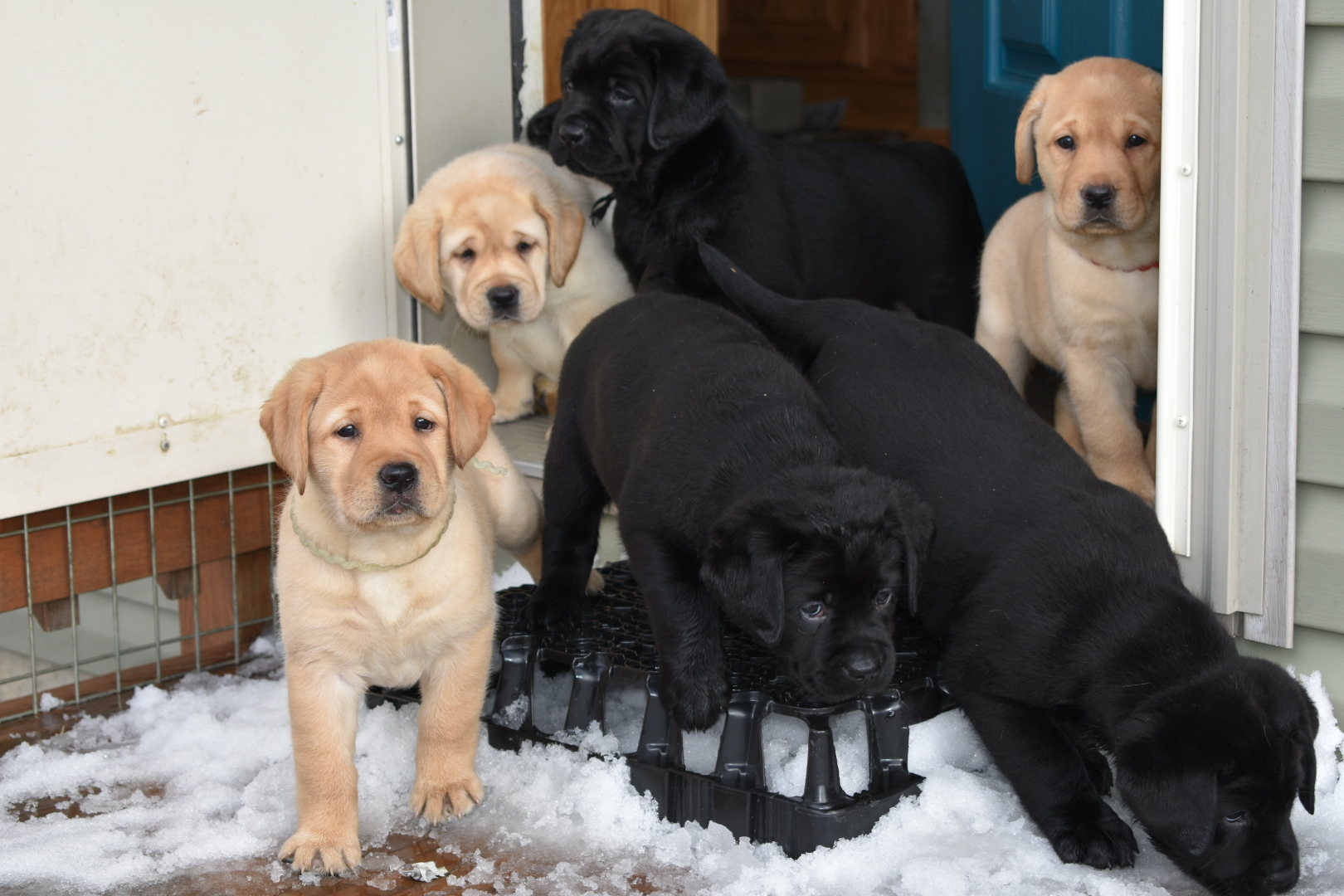 Puppy Exploration