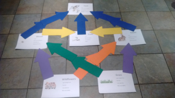 Food webs in the park