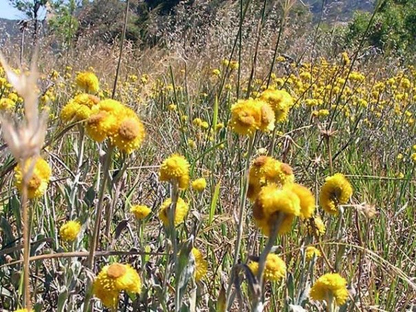 Mt Rothwell Flora