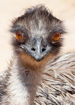 Emu Elvis