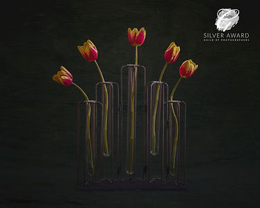 Tulips March 20 SILVER.jpg