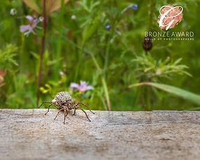 wolf spider 2 BRONZE OCTOBER 20.jpg