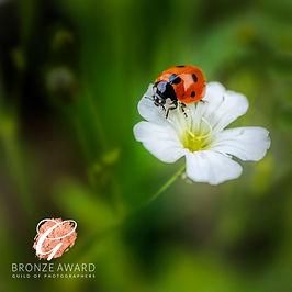 ladybird flower BRONZE JULY 20 1.jpg
