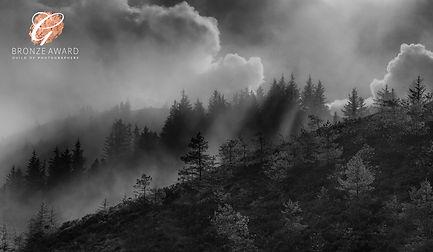 new misty trees1 BW HIGH BRONZE SEPTEMBE