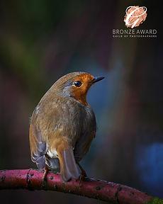 1 January bronze  Robin.jpg