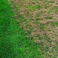 OM Thatched lawn_edited.jpg