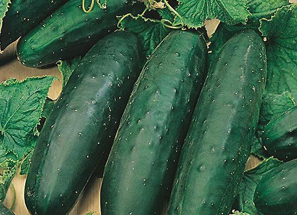 Marketmore Cucumber Plant