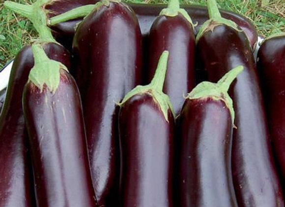 Diamond Eggplant Plant