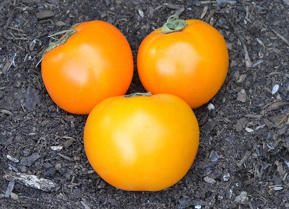 Valencia Tomato Plant