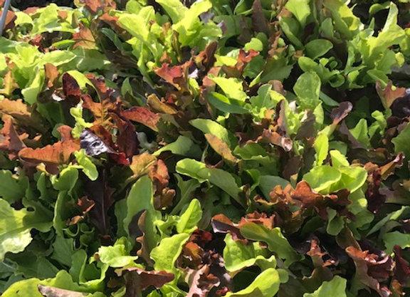 Salad Mix (1/3 lb)