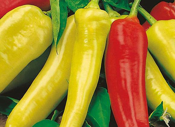 Hungarian Wax Pepper Plant