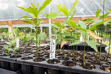 Sapling nursery image.jpg