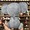 Thumbnail: Koala ~Large