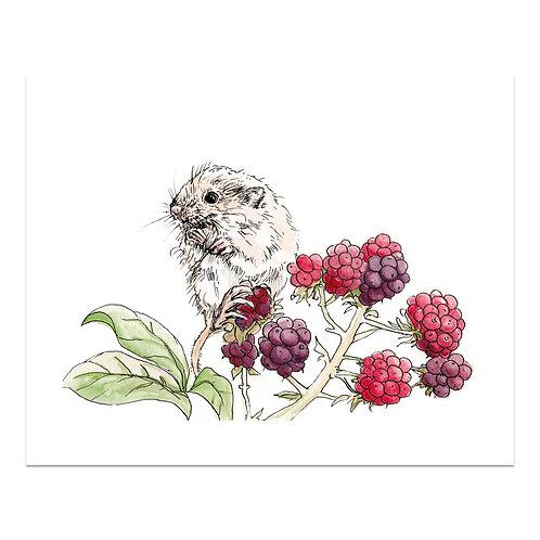 Dormouse & Berries Print