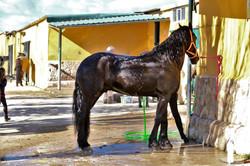 En la ducha_